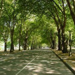 defrisarea-parcului-brezoianu.thumbnail