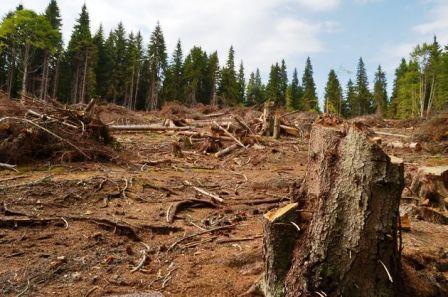 O zona intinsa de pe versantul sudic al Muntilor Fagaras este defrisata. BOGDAN DINOIU / MEDIAFAX FOTO
